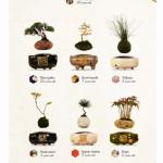 日本発の浮遊する盆栽「Air Bonsai(空中盆栽)」が斜め上すぎて驚愕